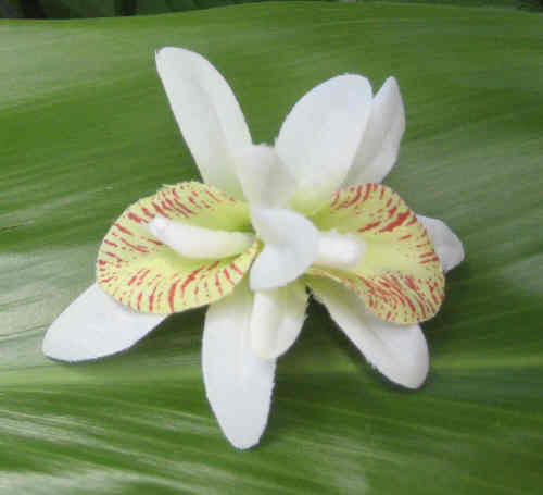 """mini - double white/green orchid clip"""