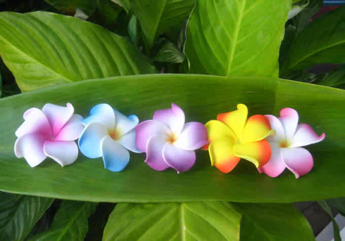"""baby plumeria"" (set of 5)"