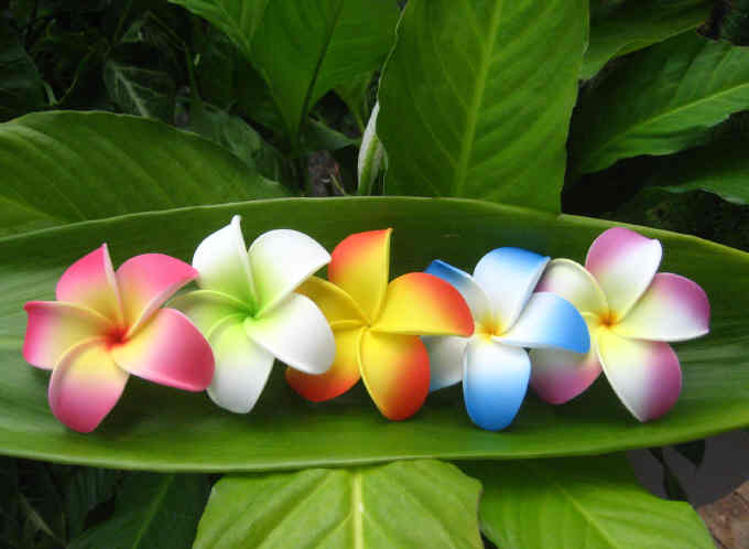 """assorted plumerias"" (set of 100)"