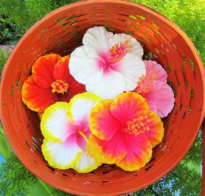 """""""aloha hibiscus"""" (for 1)"""