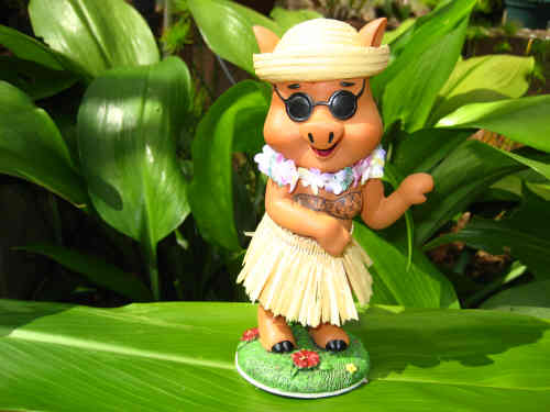 hula pig with sunglasses
