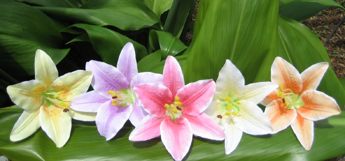 """""""lilies"""" (set of 2)"""